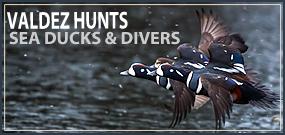 Valdez Alaska Sea Duck Hunts