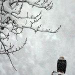 alaska_scenery_4