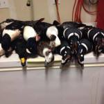 alaska_sea_duck_hunting_2
