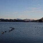sea_ducks_31